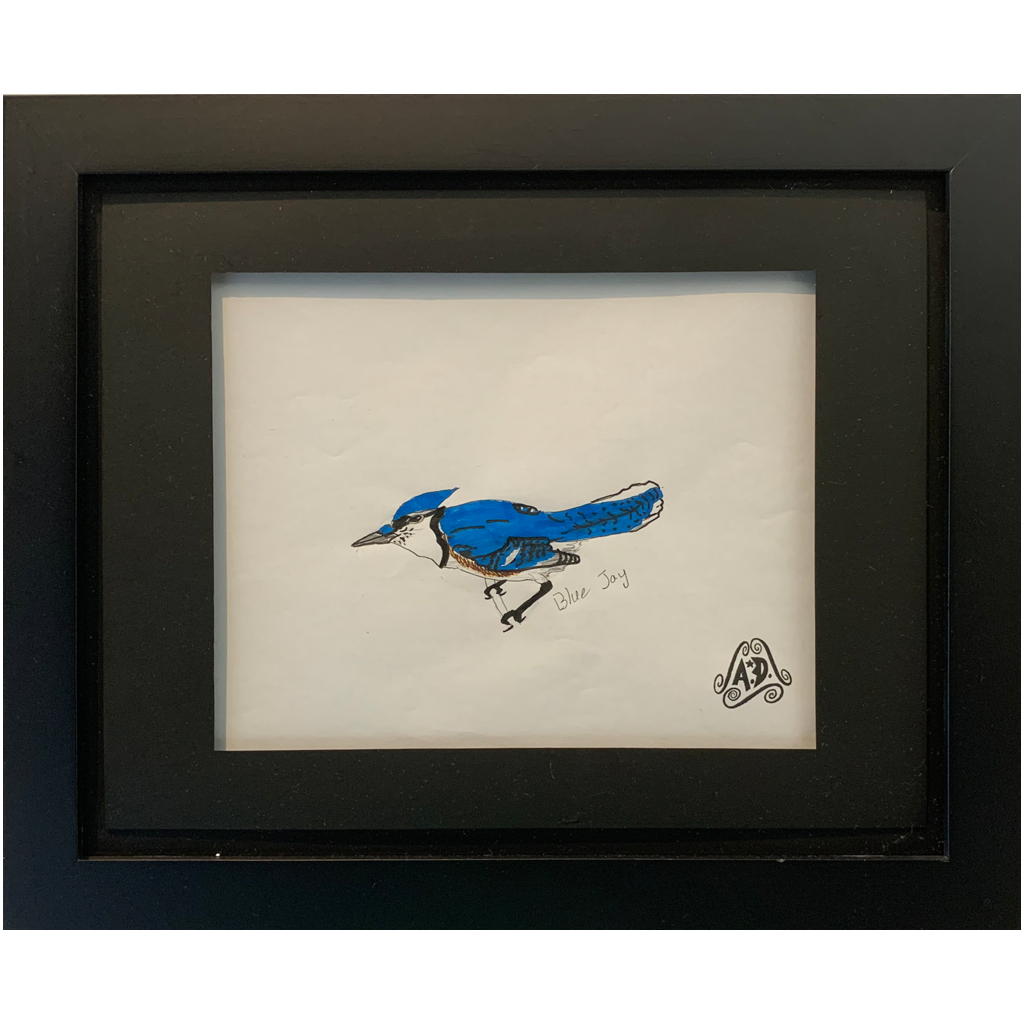 Augustin Didier   -   Blue Jay   -   pencil and ink   -   $20