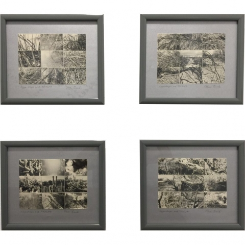 Ellen Band  -  Appendages and Whole #1 #2 #3 & #4  -  Photograph  -  NFS