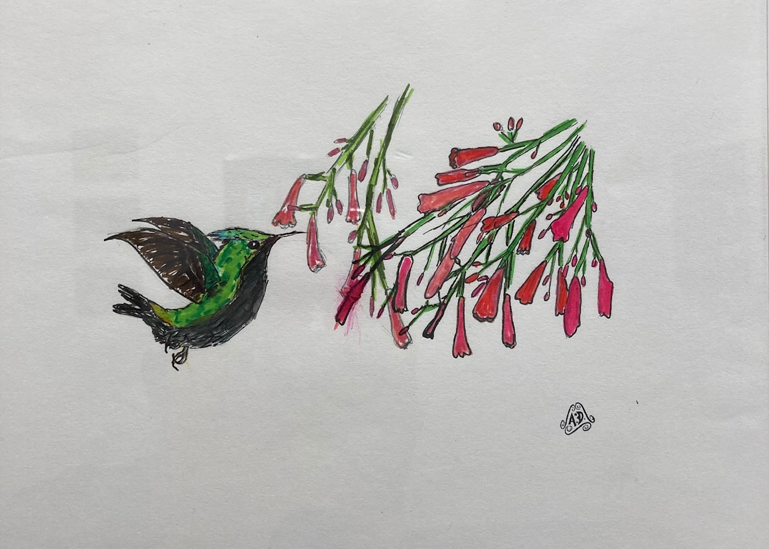 Augustin Didier  -  Antillean Crested Hummingbird  -  pencil & ink  -  $35.00
