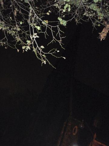 Lois Fiore  -  Harvard Square at Night  -  photograph  -  $150.00