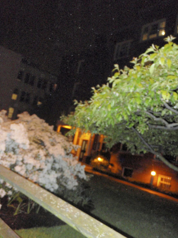 Lois Fiore  -  Night Flowers 1  -  photograph  -  $225.00