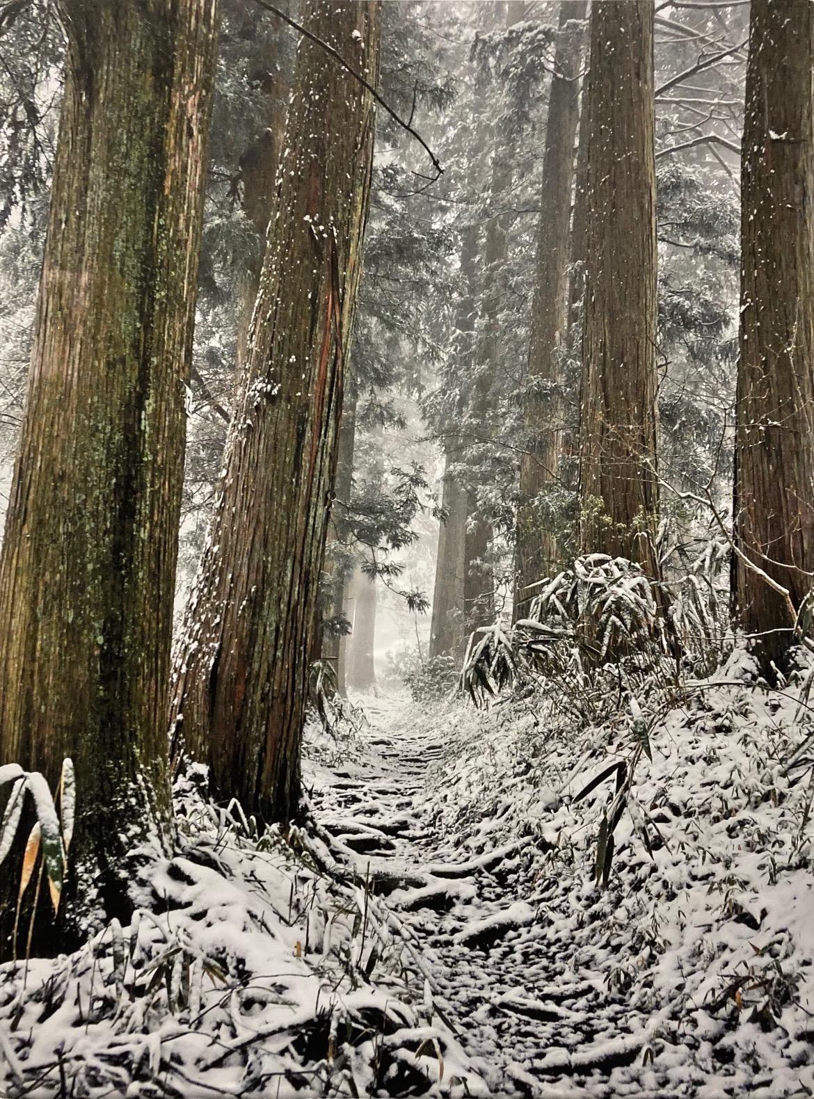 Ted Prato  -  Snowy Path  -  photograph  -  $170.00